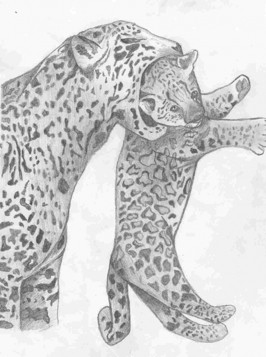 The Best Cheetah Pencil Drawing Tutorials Pencil Drawings Of Cheetahs | Drawing Work Images