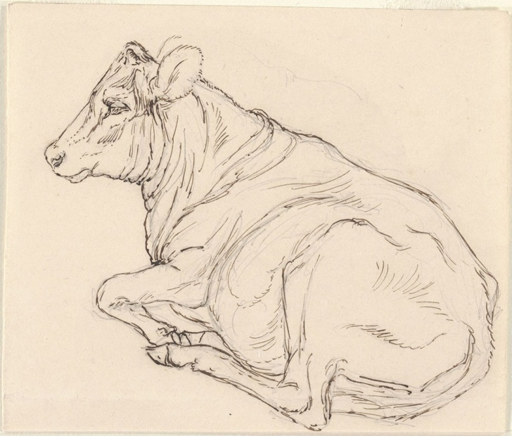 The Best Cow Pencil Sketch Step by Step Pen And Ink And Pencil Sketch Of A Cow, Reclining - Digital Pic