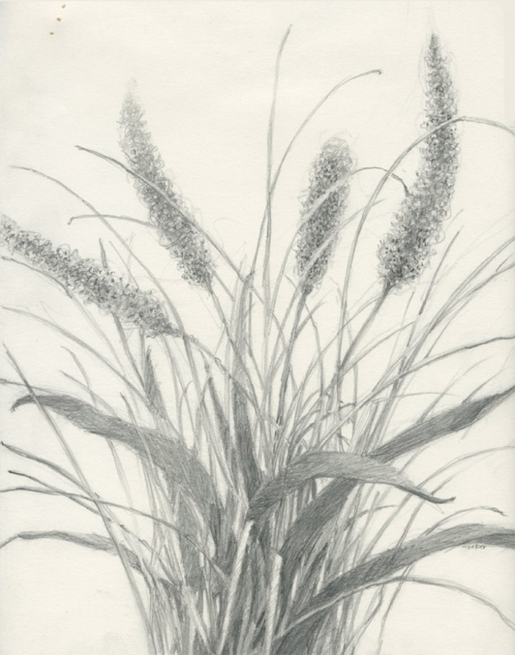 The Best Drawing Grass With Pencil Simple Grass Pencil Drawing At Paintingvalley | Explore Collection Of Image