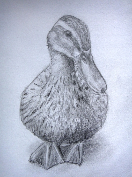 The Best Duck Pencil Sketch Ideas Duck Sketch | Art In 2019 | Drawings, Duck Drawing, Pencil Drawings Photos