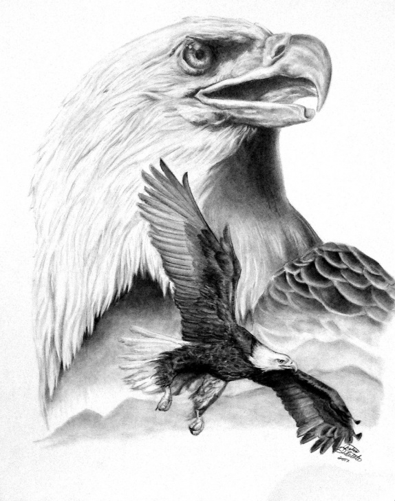 The Best Eagle Pencil Art Techniques for Beginners Bald Eagle Pencil Sketch At Paintingvalley | Explore Collection Image