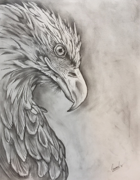 The Best Eagle Pencil Sketch Techniques for Beginners Eagle Pencil Drawing - Album On Imgur Pic