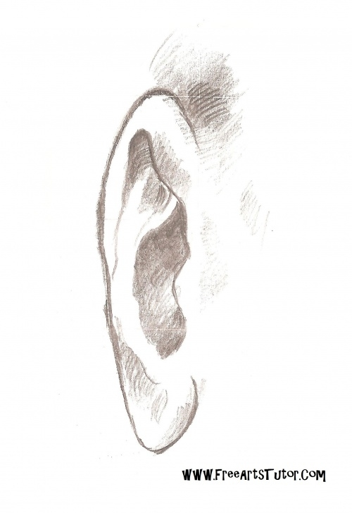 The Best Ear Pencil Drawing Free How To Draw Ear (Front View - Pencil Drawing) Images