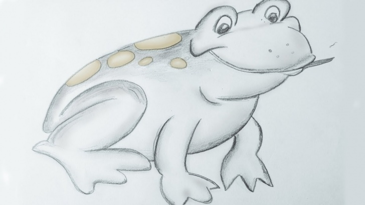 The Best Frog Pencil Sketch Tutorial Frog Pencil Sketch   How To Draw In Easy Steps For Children, Kids, Beginners Images