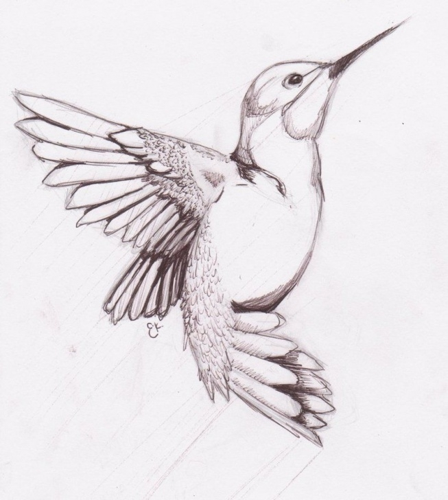 The Best Hummingbird Drawings In Pencil for Beginners Humming Bird Sketch By ~Chibikitty343 On Deviantart Pictures