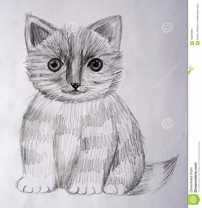 The Best Kitten Pencil Drawing Lessons A Black And White Kitten Is Drawn In Pencil Stock Vector Photos
