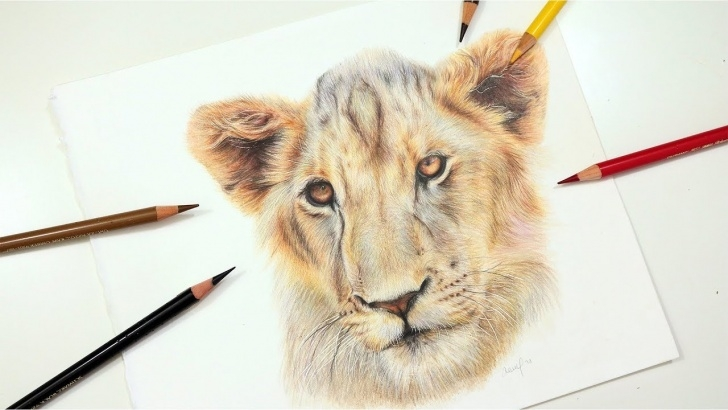 The Best Lion Colored Pencil Drawing Tutorials Learn To Draw A Realistic Lion Using Colored Pencil | Drawing Tutorial Photos