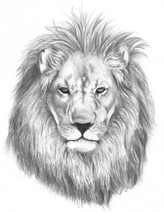 The Best Lion Pencil Sketch Lessons Lion Face Pencil Drawing At Paintingvalley | Explore Collection Image