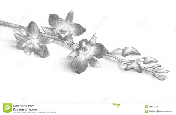 The Best Orchid Pencil Drawing Tutorial Pencil Drawing Of Orchid Flowers Stock Images - Image: 15589264 Images