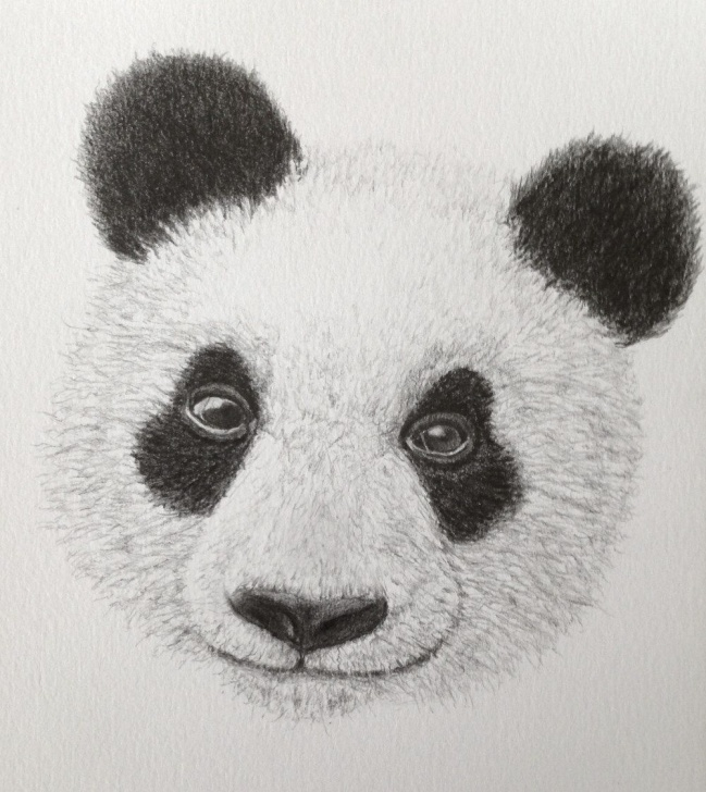 The Best Panda Pencil Drawing Lessons Panda Pencil Drawing. Gallery For Realistic, Figurative Drawings For Pic