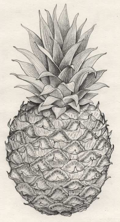 The Best Pineapple Pencil Drawing Step by Step Thinking Of An Antique Pineapple Tat - Represent My Obsession With Photo