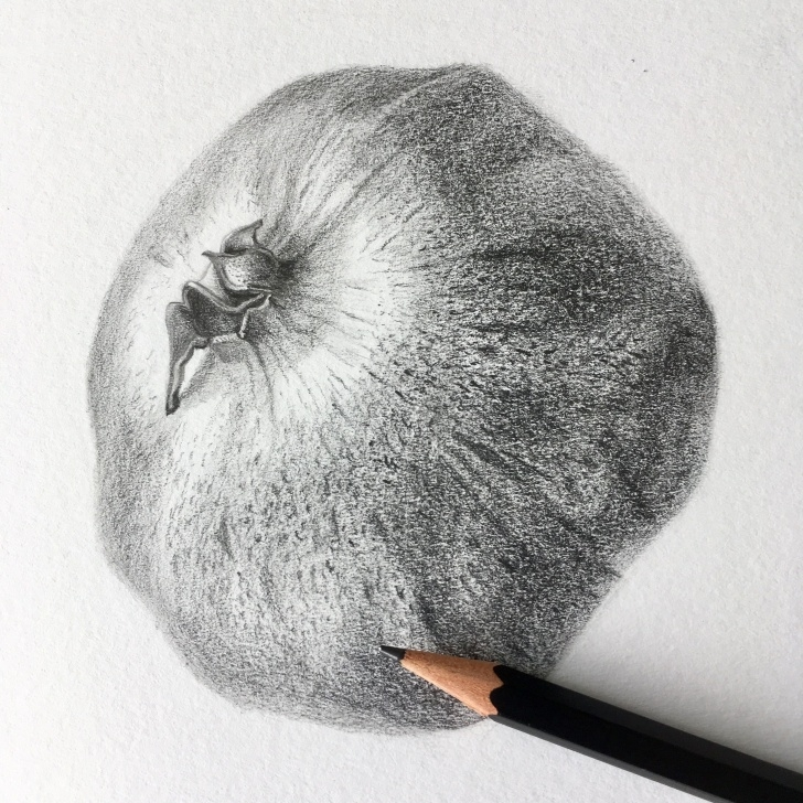 The Best Pomegranate Pencil Drawing Courses Pomegranate Botanical Drawing, Pencil, Marjo Hofmann, Rotterdam Pics
