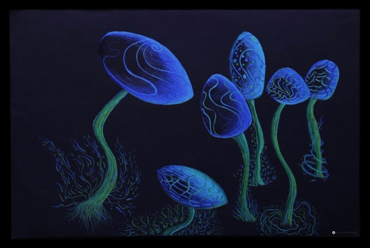 "The Best Prismacolor On Black Paper Simple Shrooms"", Prismacolor Pencils On Black Paper, 12"" X 18"" : Art Photos"