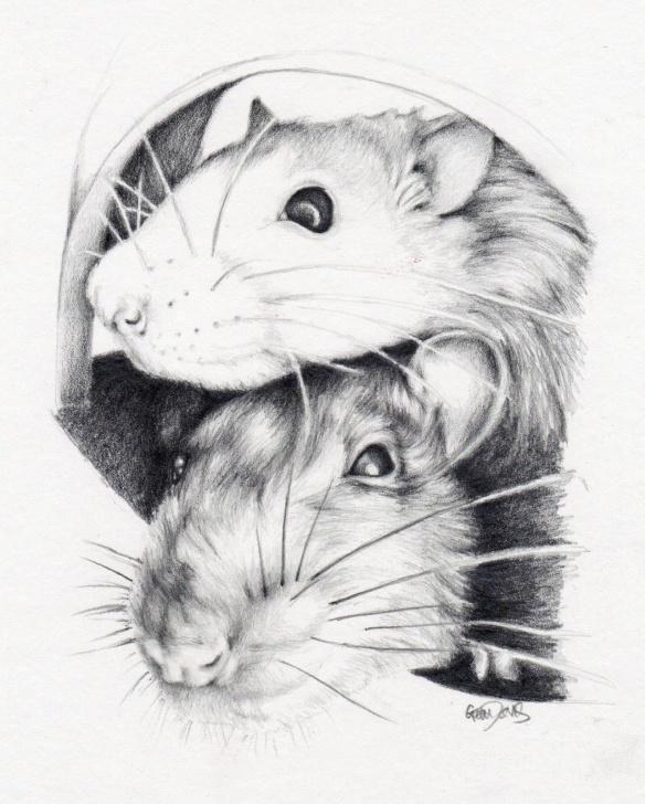 The Best Rat Pencil Drawing Ideas Gem Davis: Drawing Rats | Living My Current Life By In 2019 | Cute Photos