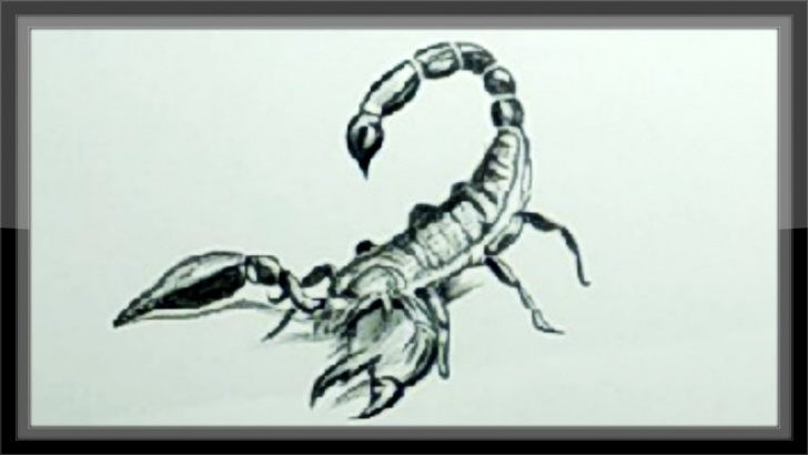 The Best Scorpion Pencil Drawing Free Easy Pencil Drawing A Scorpion Step By Step Photos