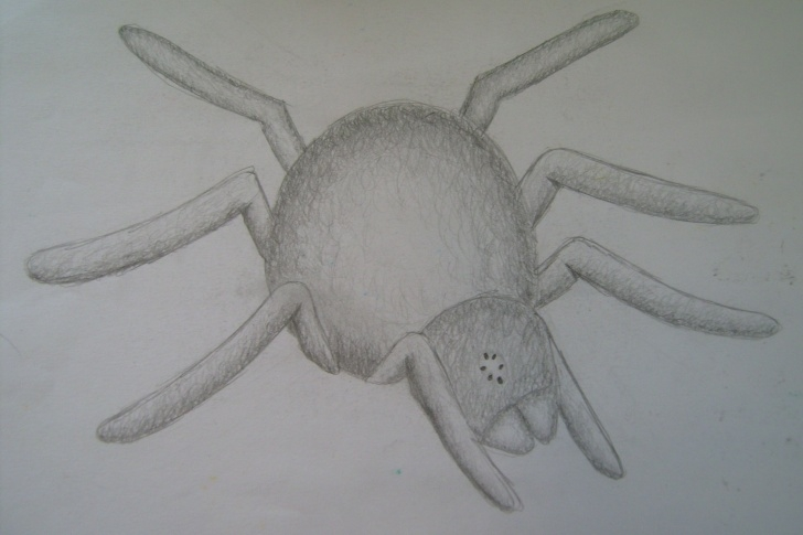 The Best Spider Pencil Drawing Lessons File:pencil Drawing - Spider - Wikimedia Commons Pictures