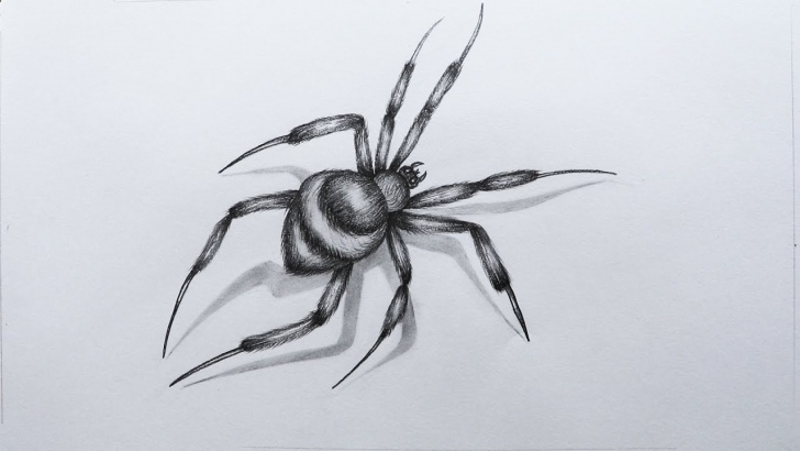 The Best Spider Pencil Drawing Techniques How To Sketch A Spider Pictures