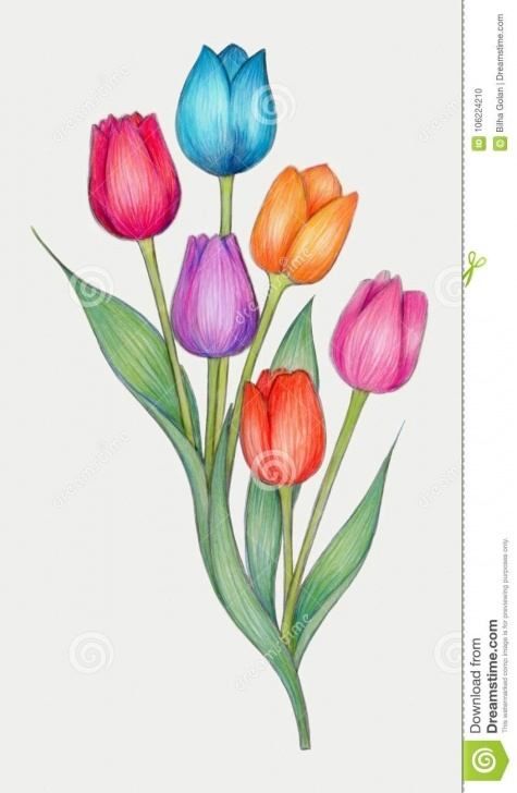 The Best Tulip Drawings In Pencil Free Colored Pencils Drawing Of Tulips Stock Illustration - Illustration Pics