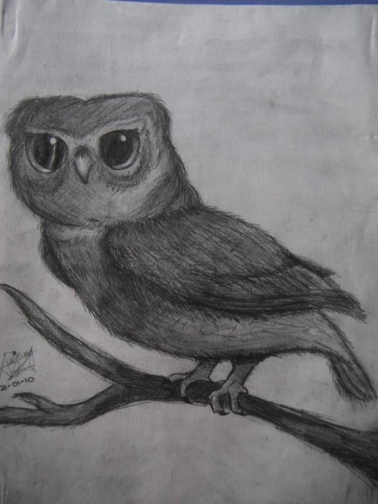 The Best Weird Pencil Drawings Techniques Weird Owl Pencil Drawing By A-Naira On Deviantart Photos