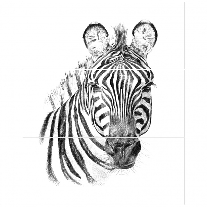 The Best Zebra Pencil Drawing Step by Step 'pencil Zebra Sketch In Black And White' Oil Painting Print Multi-Piece  Image On Wrapped Canvas Images
