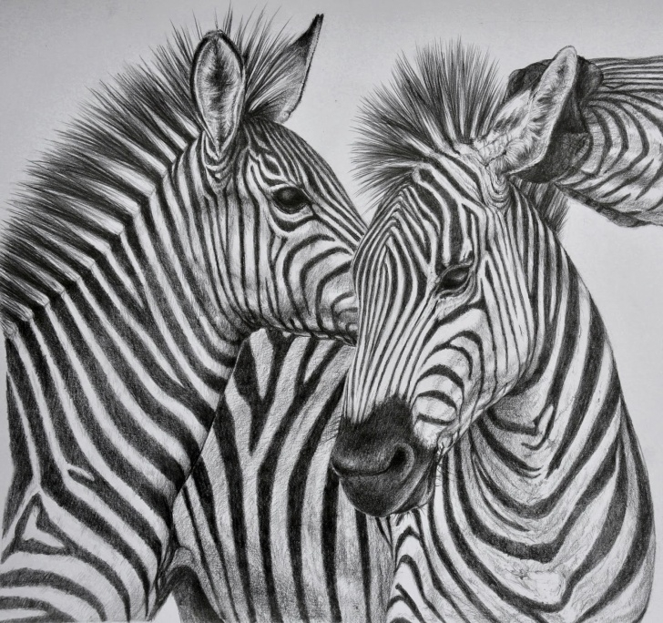 The Complete Animal Sketches In Pencil Techniques for Beginners 40 Beautiful And Realistic Animal Sketches For Your Inspiration Photo
