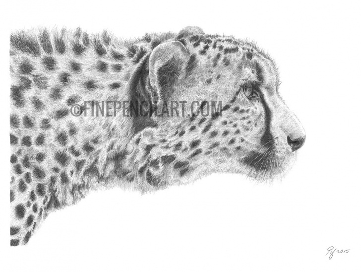 The Complete Cheetah Pencil Drawing Tutorial Cheetah Fine Art Drawing Photo