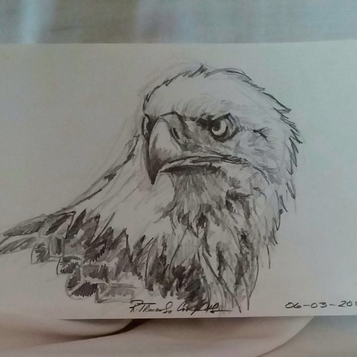 The Complete Eagle Pencil Sketch Step by Step Eagle Bald Eagle American Eagle Pencil Drawing Original Pic