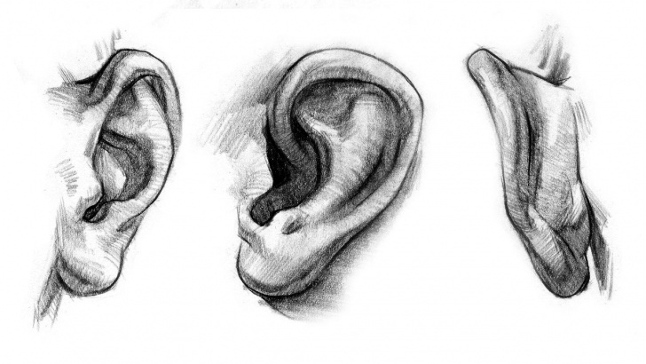 The Complete Ear Pencil Drawing for Beginners In This Video Tutorial I Dig Deep Into The Ears And Explore Ear Pictures