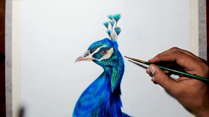 The Complete Easy Prismacolor Drawings Tutorial Drawing A Peacock - Step By Step Tutorial - Prismacolor Pencils Pic
