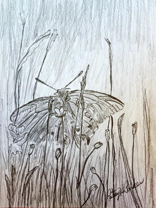 The Complete Grass Pencil Drawing Tutorials Butterfly In The Grass – Pencil Drawing | Patsy's Creative Corner Pics
