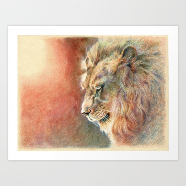 The Complete Lion Colored Pencil Drawing Courses African Lion Colored Pencil Drawing Art Print Pic