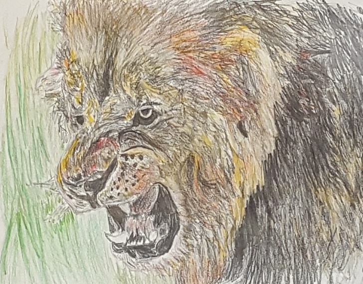 The Complete Lion Colored Pencil Drawing Courses Lion Colored Pencil Drawing — Steemit Pics