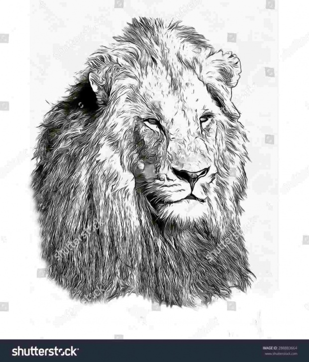 The Complete Lion Face Pencil Drawing Free How-Lion-Face-Pencil-Drawing-To-Sketch-A-Lion-Step-Inspiration Pictures