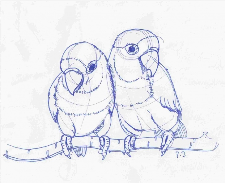 The Complete Love Birds Pencil Drawing Step by Step Pencil Sketches Of Love Birds Image