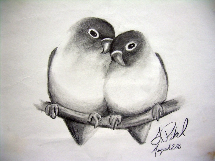 The Complete Love Birds Sketch Ideas Love Birds Sketching Love Birds Sketching – Drawing Art Ideas Photo