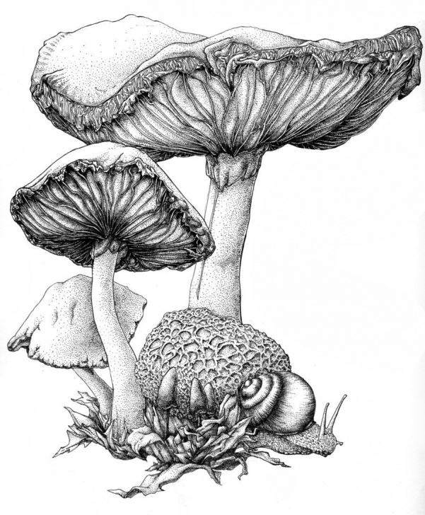 The Complete Mushroom Drawings Pencil Simple How To Draw A Mushroom | Mushroom Ink By Bigredsharks Traditional Image