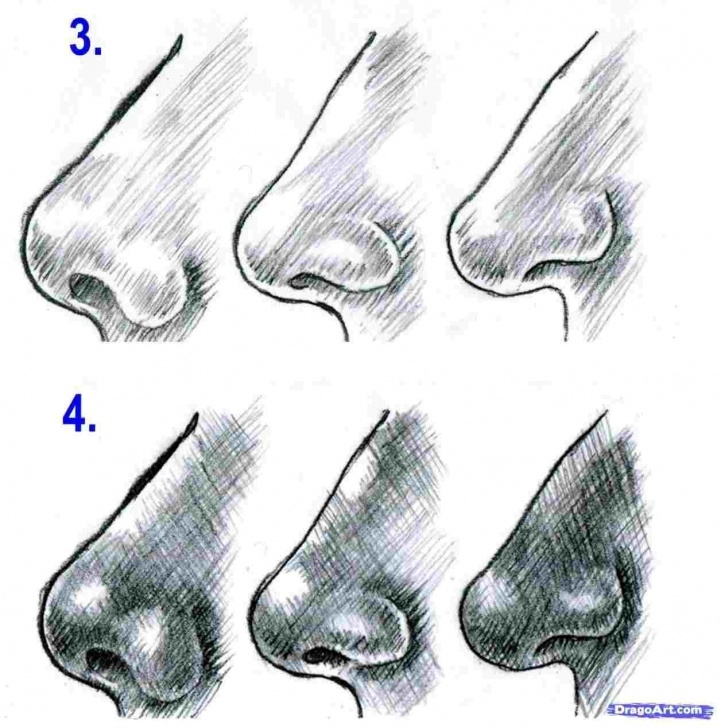 The Complete Nose Pencil Sketch Step by Step Pencil Drawings Of Nose Step By Step Images