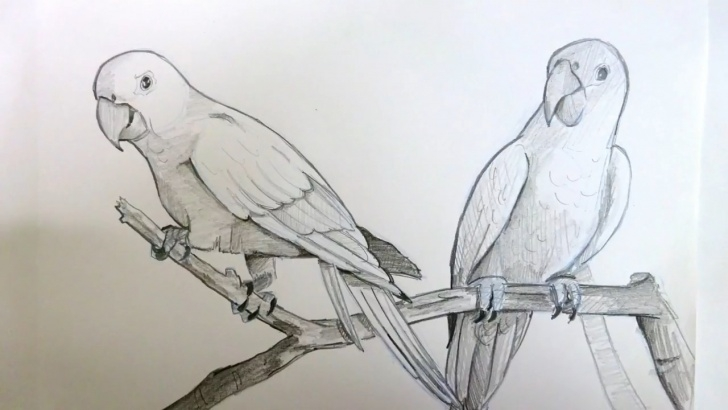 The Complete Parrot Pencil Sketch Step by Step Drawing Two Parrots Sitting On A Branch | Pencil Art | Timelapse Pic
