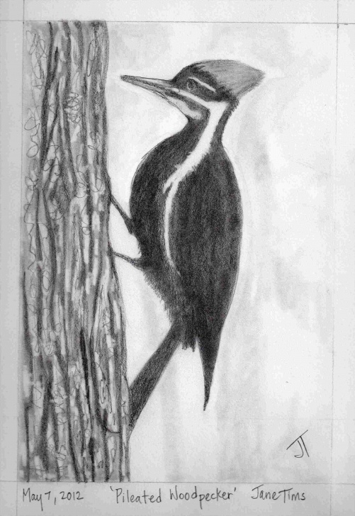 The Complete Pencil Shading Animals Simple Gallery Easy Pencil Shading Drawings Of Animals Of Pencil Drawings Images
