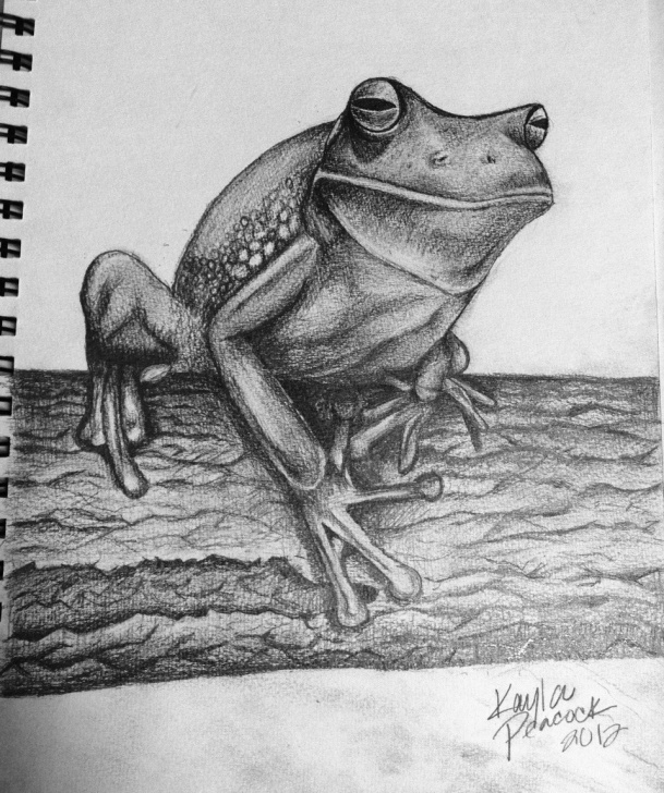 The Complete Pencil Sketch Of Frog Easy Frog Pencil Drawing At Paintingvalley | Explore Collection Of Photos