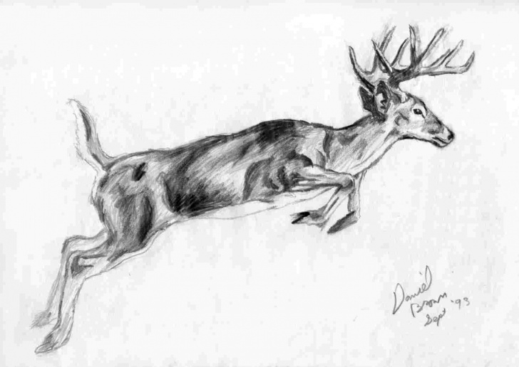 The Complete Pencil Sketches Of Wild Animals Free Wild Animals Pencil Sketch | Drawing Work Images