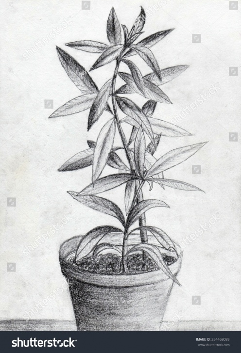 The Complete Plant Pencil Drawing Ideas Pencil Drawing Plant Flower Pot Stock Illustration 354468089 Pictures