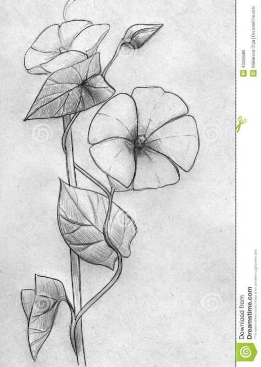 The Complete Plant Pencil Drawing Tutorial Decorative Creeping Plant Stock Illustration. Illustration Of Pic