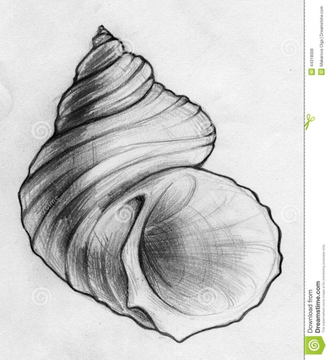 The Complete Seashell Pencil Drawing Simple Done Sea Shell Sketch Stock Illustration - Image: 44318008 | Art In Photo
