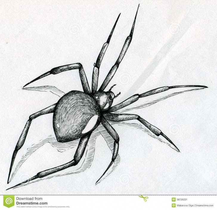 The Complete Spider Pencil Drawing Techniques for Beginners Pinterest Picture