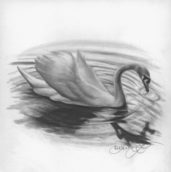 The Complete Swan Pencil Drawing Free Learning To Draw With Graphite Pencil | Drawing | Pencil Drawing Photo