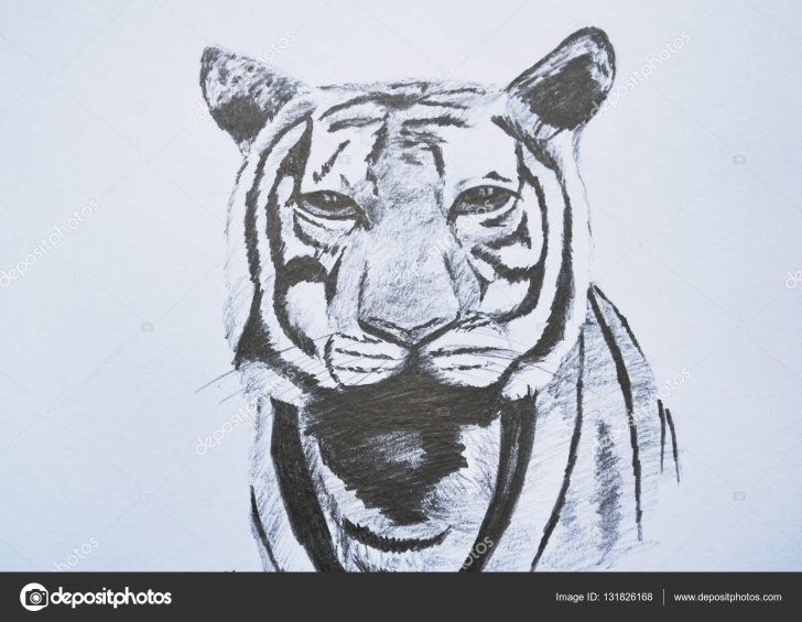 The Complete Tiger Face Drawing Pencil Techniques Images: Tiger Face Drawing Pencil | Tiger Face Portrait Pencil Photos