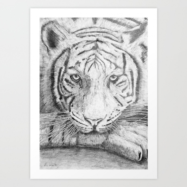 The Complete Tiger Pencil Art for Beginners The Tiger - Pencil Drawing Art Print Photo