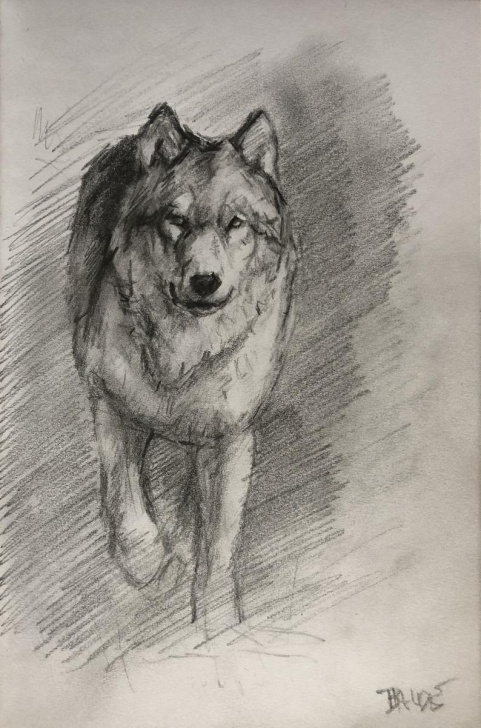 The Complete Wolf Pencil Sketch Tutorials Original Wolf Pencil Sketch Photo