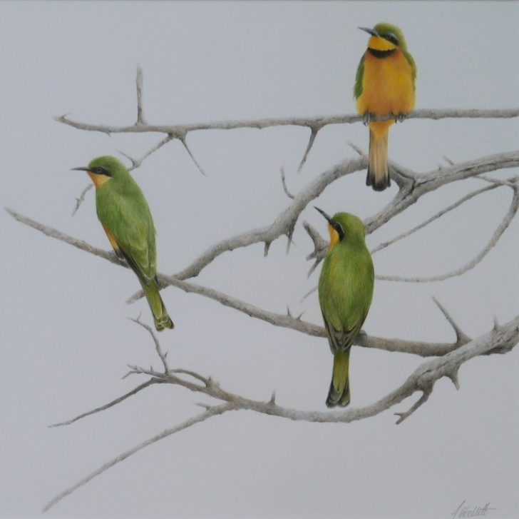 The Most Famous Alan Woollett Art Ideas Alan Woollett - Little Bee Eaters, Tanzania - Coloured Pencil Pics